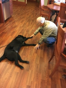 Dog Visit-Eagan Pointe Senior Living-Same the rescue lab